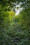 El túnel del amor del borde del camino del tren abandonado alinea fotos de archivo