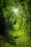 El túnel del amor de Caransebes imagenes de archivo