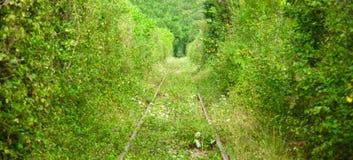 El túnel del amor en Rumania foto de archivo