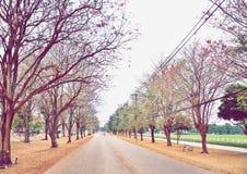 El túnel romántico de los árboles rosados de la flor Fotografía de archivo libre de regalías