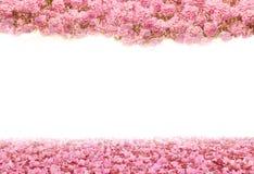 El túnel romántico de los árboles rosados de la flor foto de archivo