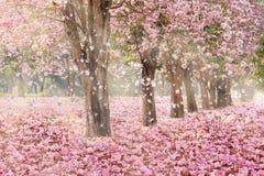 El túnel romántico de los árboles rosados de la flor imágenes de archivo libres de regalías