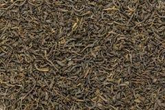 El té verde orgánico (sinensis de la camelia) secó las hojas largas Fotos de archivo libres de regalías