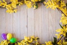 El tablero de madera con forsythia amarilla de la primavera florece y los huevos coloridos Imagenes de archivo