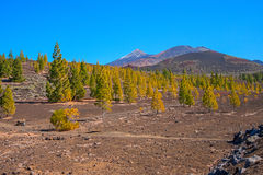 El Taide火山的山麓小丘 图库摄影