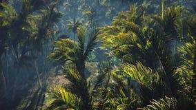 El tanque arruinado miente en la selva en el medio de las palmeras y de la vegetación tropical libre illustration
