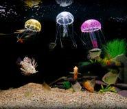 El tanque casero del acuario Foto de archivo libre de regalías
