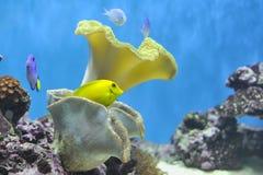 El tanque de pescados de Nemo Imágenes de archivo libres de regalías