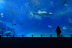 El tanque del acuario imágenes de archivo libres de regalías