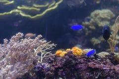 El tanque del arrecife de coral fotos de archivo libres de regalías