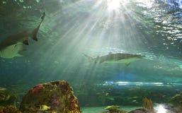 El tanque del tiburón en el acuario Canadá de Ripley Foto de archivo libre de regalías