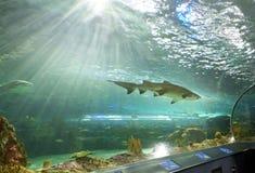 El tanque del tiburón en el acuario Canadá de Ripley Imagen de archivo libre de regalías
