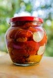 El tarro con los tomates secos con las hierbas picantes Imagen de archivo libre de regalías