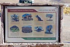 El Tatio gejzery, Chile Zdjęcia Stock