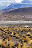 El Tatio Geysers in Chile Royalty Free Stock Images