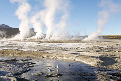 El Tatio geysers, Chile Stock Photography