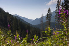 El Tatras imagenes de archivo