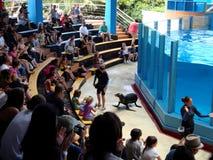 el teatro acuático muestra la belleza de la mudanza de los leones marinos de los animales marinos Imágenes de archivo libres de regalías