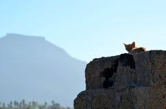 EL Teide e gatto Immagini Stock