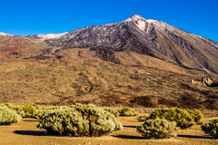 El Teide Volcano and Green Bushes-Tenerife,Spain Royalty Free Stock Photography