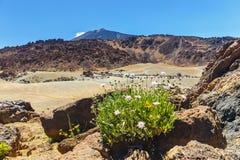 El Teide Volcano in Tenerife Stock Photos