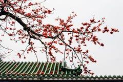 El tejado de la casa con una flor hermosa Imagenes de archivo