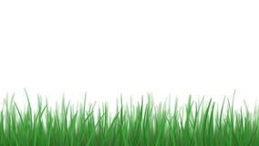 El tejer aislado de la hierba, loopable almacen de metraje de vídeo