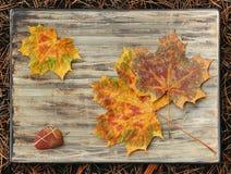 El tema de las hojas de otoño Imagen de archivo