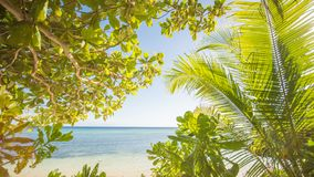 El tema tropical Naturaleza exótica de Asia filipinas Palmeras que pasan por alto el mar imagenes de archivo