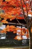 El templo cerca del árbol de arce Imagen de archivo libre de regalías
