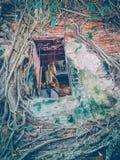 El templo se cubre con un rizoma grande foto de archivo