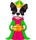 El terrier de Boston como unos de los reyes magos bíblicos Fotografía de archivo libre de regalías