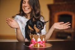 El terrier de la mujer y de juguete con el perro se apelmaza en frente en fiesta de cumpleaños Fotografía de archivo