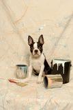 El terrier y la pintura de Boston pueden salpicar Fotos de archivo libres de regalías