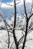 El thorugh considerado paisaje borroso del invierno helar-cubrió ramas Fotos de archivo libres de regalías