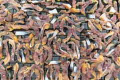 El tiburón iridiscente secado o el siluro rayado o el siluro de Sutchi Foto de archivo libre de regalías