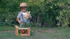 El tiempo de cosecha, niño limpia el maíz cerca del cajón de madera con veggies frescos en el pueblo metrajes