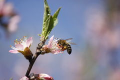 El tiempo de primavera… subió las hojas, fondo natural Fotografía de archivo libre de regalías