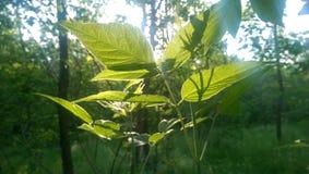 El tiempo de primavera… subió las hojas, fondo natural Foto de archivo libre de regalías