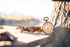 El tiempo pasa: aire libre del reloj del vintage; madera y hojas imagenes de archivo