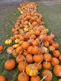El tiempo y la diversión de Halloween tenían por todo el mundo foto de archivo