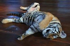El tigre es también un gato tailandia Fotos de archivo libres de regalías