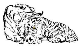 El tigre está mirando fijamente libre illustration
