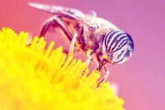 El tigre observa el pequeño insecto Fotografía de archivo libre de regalías