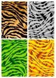 El tigre pela textura Fotos de archivo libres de regalías