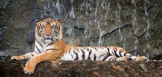 El tigre se sienta en salvaje profundo fotografía de archivo libre de regalías
