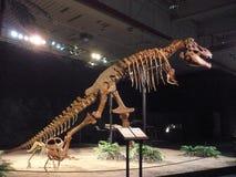 El tiranosaurio Imagenes de archivo