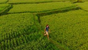 El tiro aéreo de un hombre joven que camina a lo largo del arroz hermoso coloca en la isla de Bali metrajes