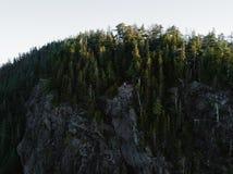 El tiro aéreo del árbol remata en bosque denso Foto de archivo libre de regalías