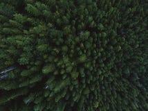 El tiro aéreo del árbol remata en bosque denso Imagen de archivo